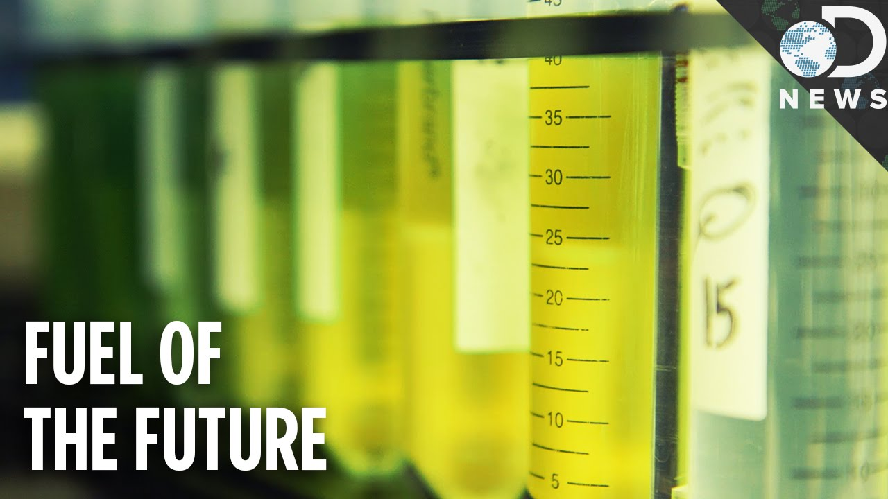 algae should not be the future biofuel The workshop 'algae – the future for bioenergy the use of algae for energy purposes is currently being studied within task 39 (liquid biofuels), task 37.