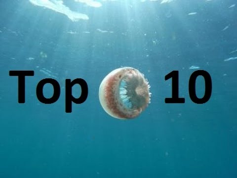 Top 10 Most Dangerous Jellyfish