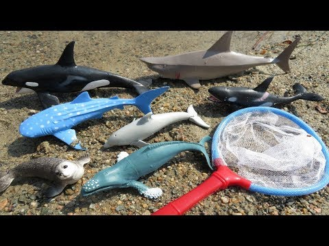 Thumbnail: Learn Sea Animals Names for Kids Educational Toys for Children Learning Animal Video