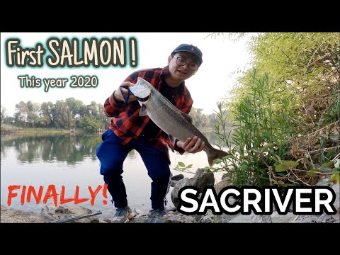 FINALLY! FIRST Salmon Of The Year! SAC RIVER! Salmon Fishing