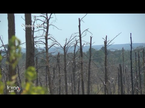 New report reveals Hidden Pines fire burned for an hour before help arrived