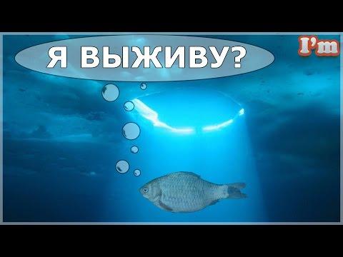 ЧТО ПРОИСХОДИТ С РЫБОЙ ЗИМОЙ? Видео для детей. Факты о рыбе! Карась самая морозостойкая рыба!