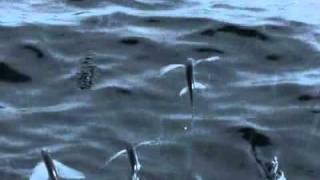 السمك يطير من غرائب الدنيا سبحان الله
