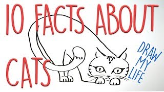 10 interesting facts about cats | Draw my life