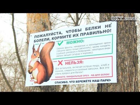 В парке им. Юрия Гагарина появились белки. Октябрьский 2018
