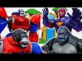 The Angry Gorilla Turned Into A Robot~! Transformers Optimus Primal #ToyMartTV