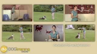 Dove Cresswell's Online Dog Training   Check It Out!