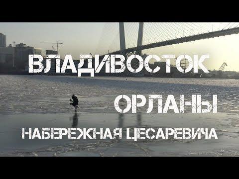 Владивосток набережная Цесаревича,орланы.