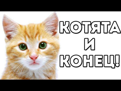 Видео Игра симулятор кошки играть онлайн бесплатно