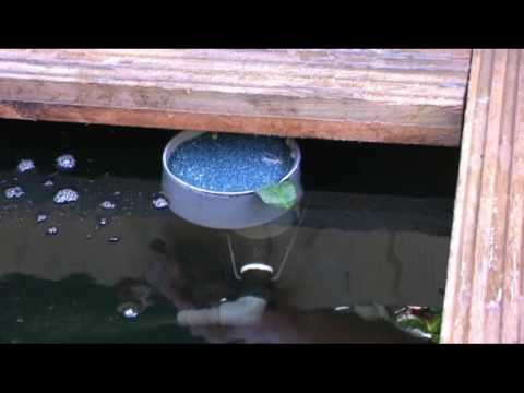 Buisfilter filtert tot 140 micron doovi for Vijver skimmer