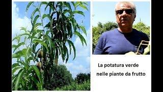 La potatura verde delle piante da frutto
