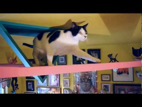 Pet World Insider Presents....The Cats House ...A Cat's Paradise