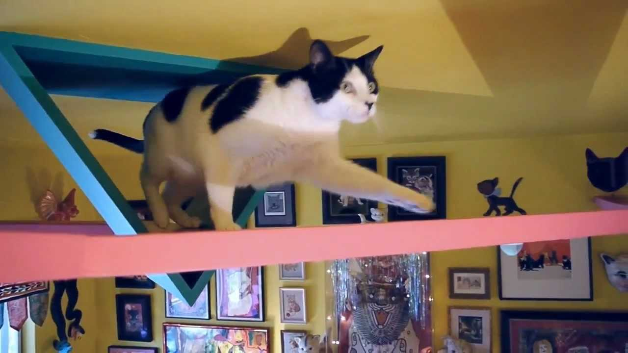 The Cats House A Cats Paradise Youtube