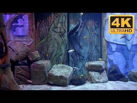 Catfish in Amazing Aquarium, Filmed in 4K Resolution