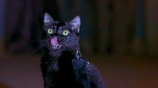 Драка Синди против кошки - Очень страшное кино 2 (2001) - момент из фильма