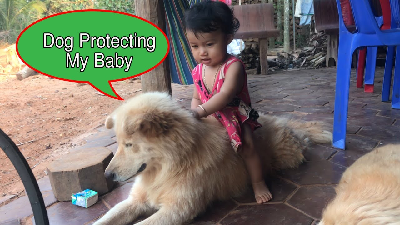My Dog Is Protecting My Newborn Baby Coz My Wife Not At Home||guard dog||Dog Protecting Baby.