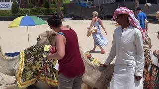 RIDING CAMELS ON DUBAI BEACH, دبي, JUMEIRAH BEACH DUBAI, CAMEL RIDING ON PUBLIC DUBAI BEACH