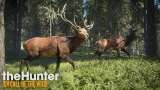 thehunter call of the wild gameplay trailer