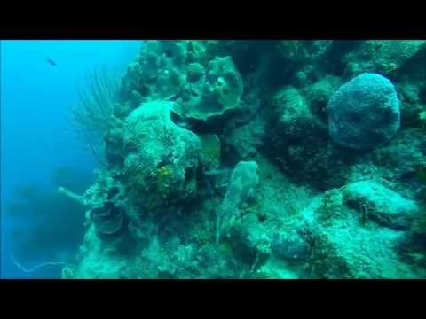 Diving at Blue Bay Curacao