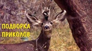 Смешные видео моменты Приколы Фейлы / Лучшая подборка приколов #10
