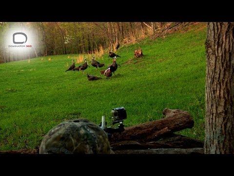 D365: Arkansas Turkey Hunting