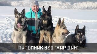 ВЕО - интервью с заводчиком! Прохорова Н.