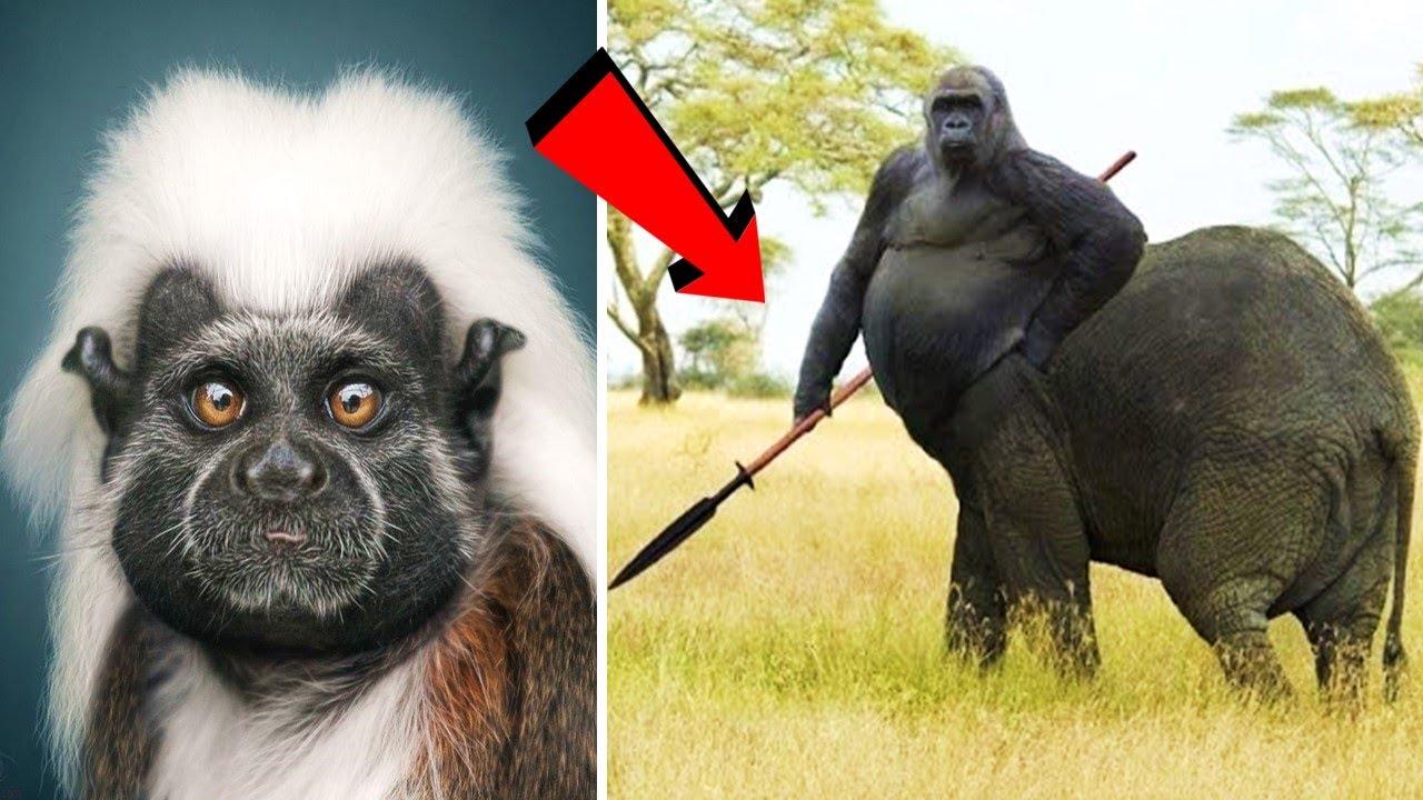 इन बंदरो को देखना सबके नसीब की बात नहीं ,देखलो..और कोई नहीं दिखायेगा |Unique & Rare Monkeys Part 3