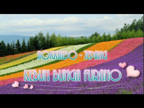 wisata-jepang;-gambar-pemandangan-sempurna-di-kebun-bunga-furano,-hokkaido-03