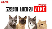 Домашние животные из рук в руки, краснодар. Купить собаку, кошку,. Отдам ласкового, любознательного котенка в…. Котята породы мейн-кун.