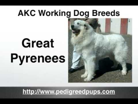 AKCWorkingDogs