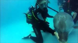 видео Дайвинг с дельфинами