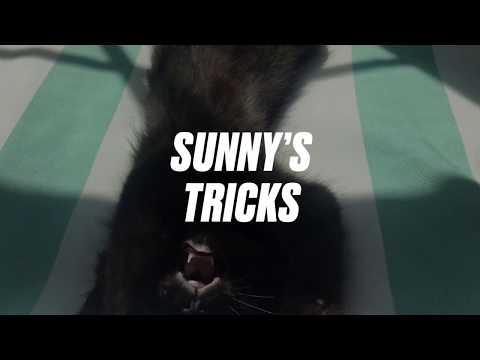 Sunny's Tricks (cool and funny cat tricks)