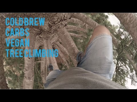 COLD BREW COFFEE  GOOD OR BAD? plus epic Tree climbing & vegan carbs for the win!