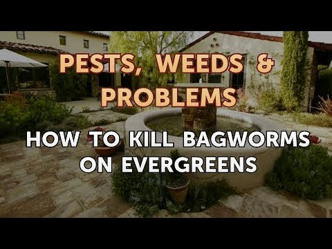 How to Kill Bagworms on Evergreens