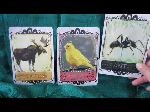 Weekly Oracle Card Reading for April 23 - 29