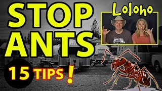 🐜 HOW TO STOP ANTS 🐜 from Invading an RV - 15 Tips!!! 🐜