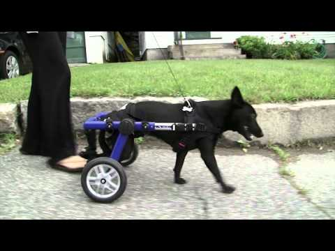 dog-puppy-training-books-cds-dvds.mp4
