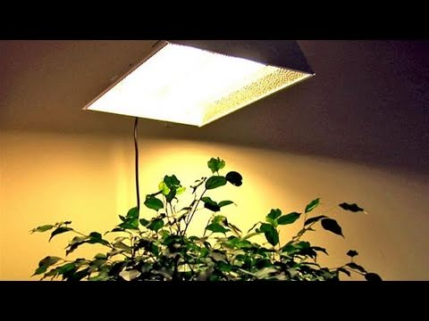 How To Understand Hydroponic Lights