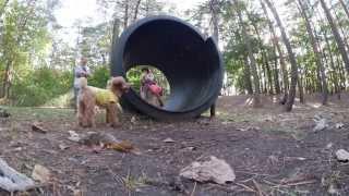 うちの愛犬(モコ)が可愛すぎるので見て欲しい 沖野玉枝 検索動画 21