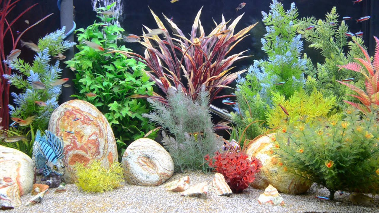 Aquarium fish tank download - Aquarium Screensaver Fishtank 1080p Hd Tropical Aquarium Downloads Com Youtube