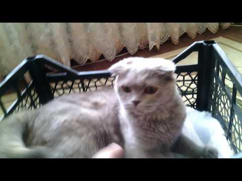Вопрос: Как и из чего можно сделать домик для кота, самостоятельно?