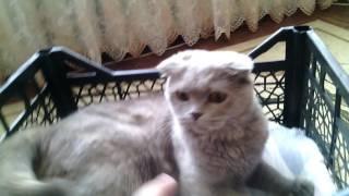 Домик для кошки из пластиковых ящиков !