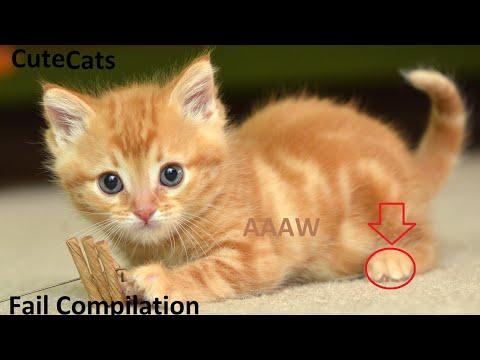 Ultimate Cute Cat Fail Compilation HD 1080p 2017 Deutsch / American