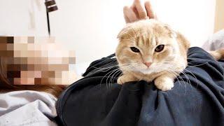 甘えん坊猫と朝まで一緒に寝てみたら…
