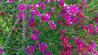ЭКО цветники: Топ 50 ландшафтов. Часть 2