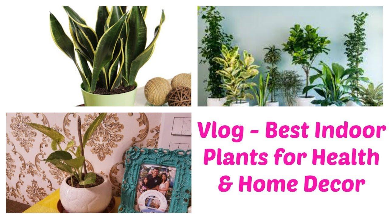 Best Indoor Plants In India For Health U0026 Home Decor | Must Have Plants In  Bedroom For Better Sleep
