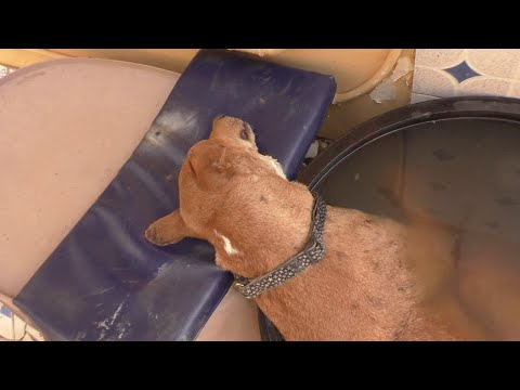 """Bob"" from Bijilo - Having a Mangoworm bath"