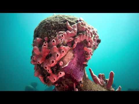 水下美術館-充滿生命力