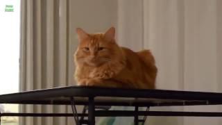 Видеоролики смешных и хулиганистых кошек и котов!