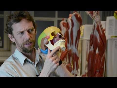 Bones of the skull and more skull anatomy